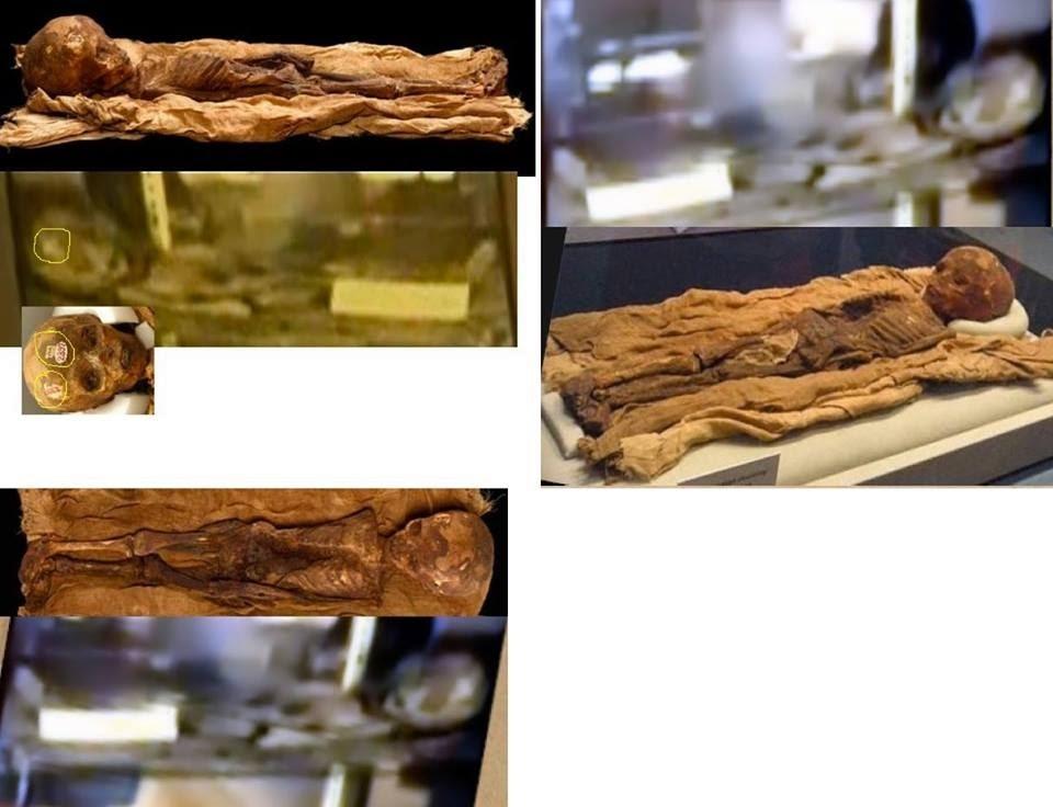 """Semelhanças entre o """"ET"""" e a múmia em exposição nos Estados Unidos! (fotos: Céticos Versus Disco Voador)"""