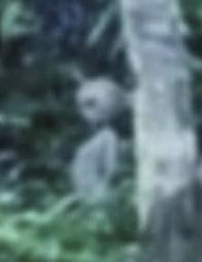 Alien filmed in Brazil rainforest - Verdadeiro ou falso?