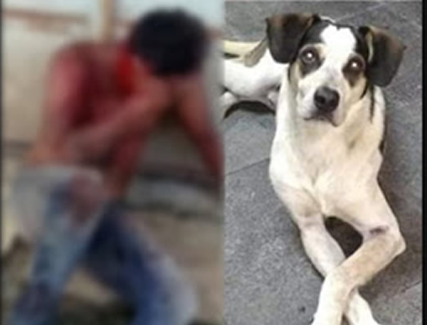 O segurança do Carrefour que matou um cachorro foi espancado por populares  em Osasco?