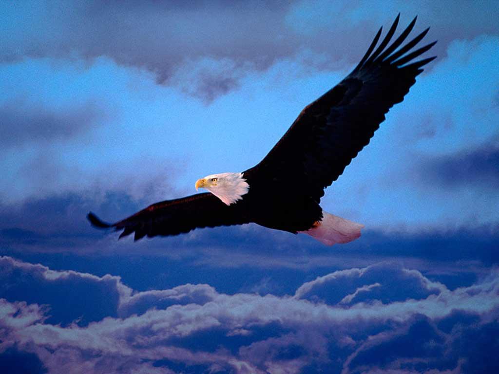 A águia Renascida Depois De Velha Lenda