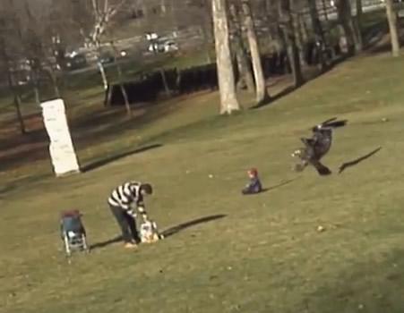 Águia tenta capturar um bebê no parque! Verdadeiro ou falso?