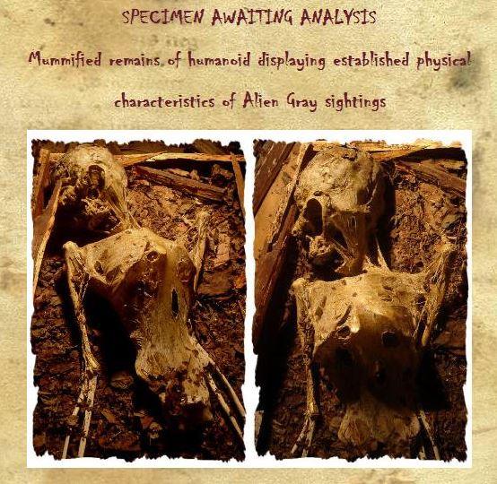 """""""Múmia egípcia"""" à venda no Museu das Monstruosidades! (foto: Reprodução)"""