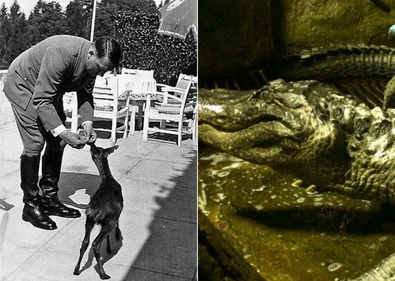 Será verdade que Hitler teve um crocodilo de estimação chamado Saturno?