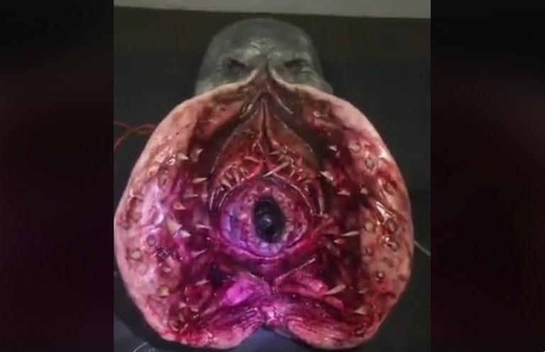 """Um estranho peixe """"alienígena"""" foi encontrado no Rio Madeira, na Amazônia?"""