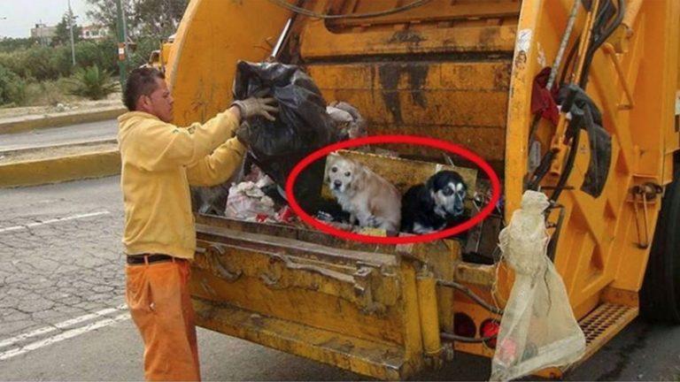 Cachorros são jogados em caminhões de lixo no México?