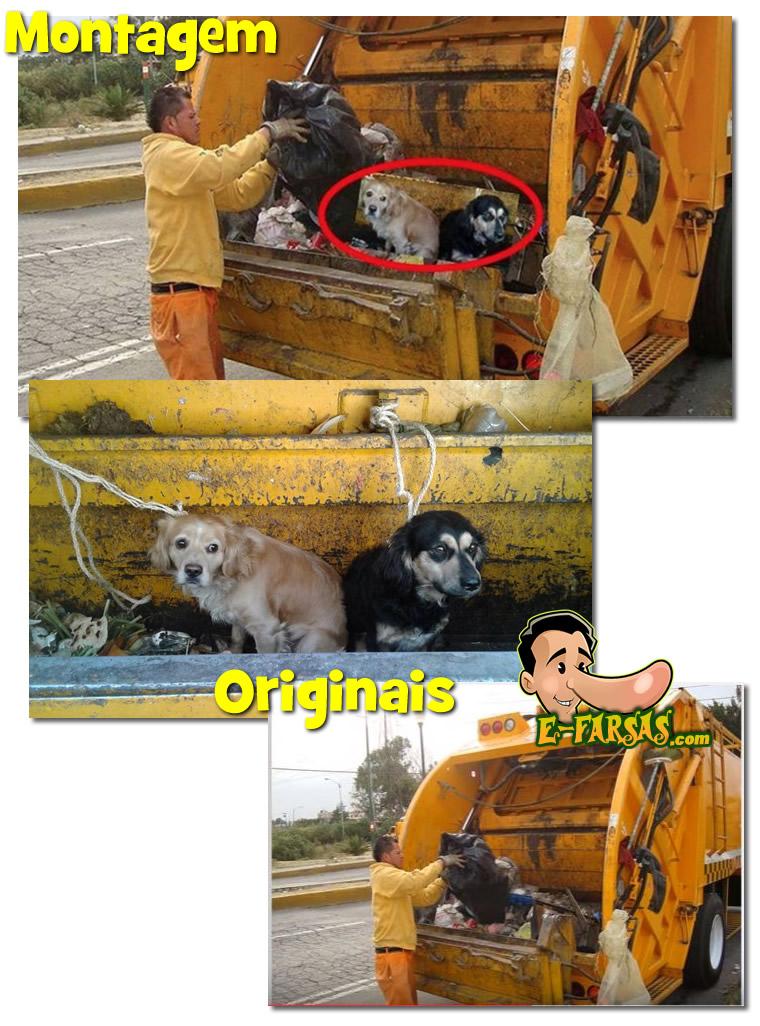 animal-no-lixo1