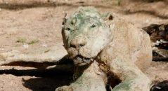 Animais teriam morrido e virado múmias em zoológico na Palestina! Será verdade? (foto: Reprodução/Facebook)