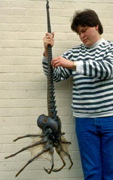 Cientistas teriam descoberto uma nova espécie de aranha gigante! Será verdade? (foto: Reprodução/Facebook)