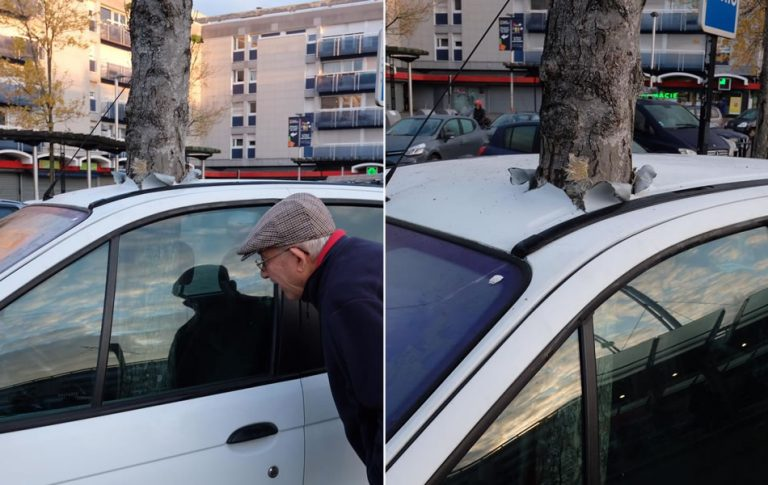 Uma árvore cresceu misteriosamente dentro de um carro na França?