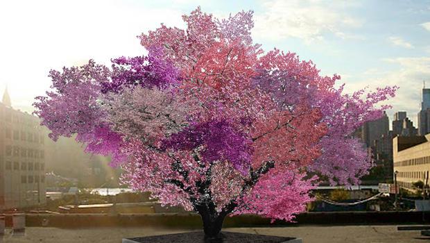 Uma árvore que dá 40 tipos de frutas! Será? (foto: Reprodução/Facebook)
