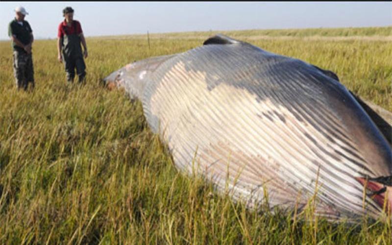 Resultado de imagem para imagem para baleia