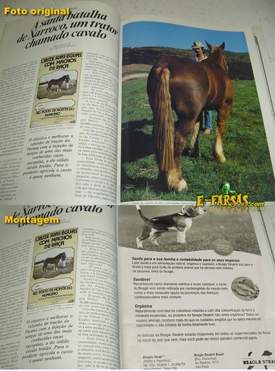 Comparativo - Foto real X Foto falsa da materia sobre a Beagle Steak