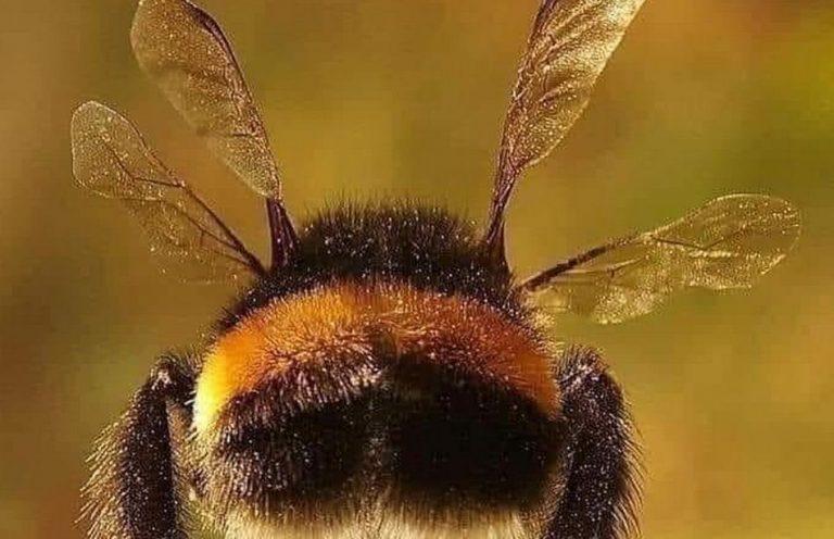 Há um pôster de abelhas na NASA dizendo que elas não foram feitas para voar?
