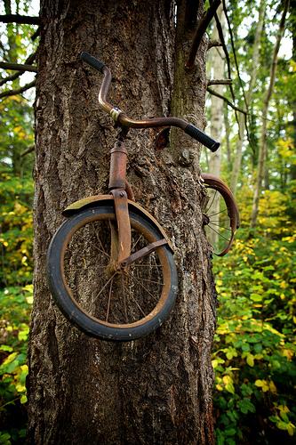 Bicicleta presa na árvore