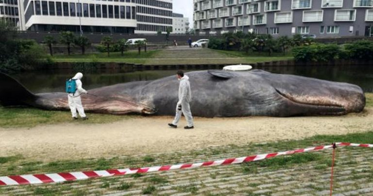 Um ovni deixou uma baleia cachalote em Oklahoma por engano?