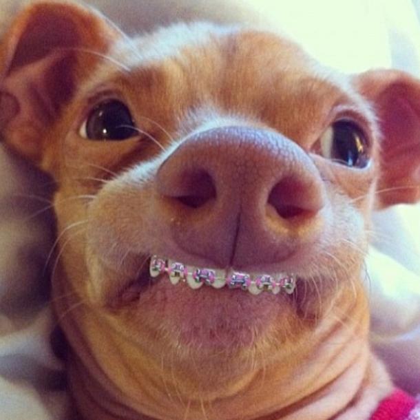 Cachorro de aparelhos nos dentes!! Verdadeiro ou falso? (foto: Reprodução/Facebook)