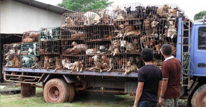 Caminhão cheio de cachorros que estariam sendo vendidos em Santos!