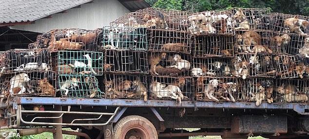 Cachorros apreendidos na Tailândia!