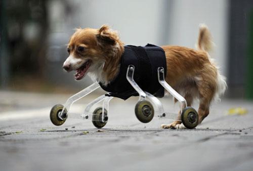 Imagem original do cachorro com as patas traseiras. (foto: Reprodução/Reuters)