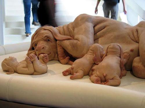 Foto mostra família de cães com feições humanas!