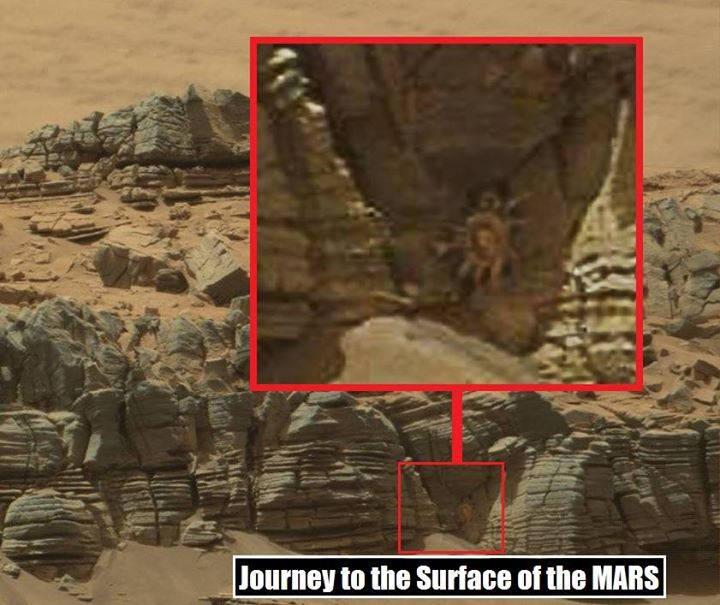 Enorme caranguejo teria sido encontrado em Marte! Será? (foto: Reprodução/Facebook)