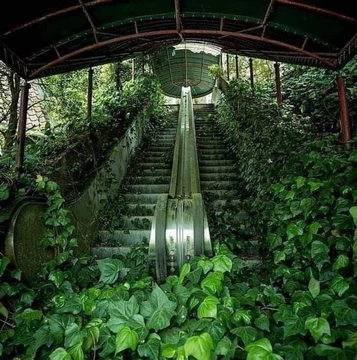 Foto mostra a vegetação invadindo um Carrefour que ficou 10 anos fechado! Será?