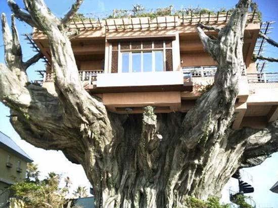 Casa na árvore - Restaurante em Okinawa - Japão