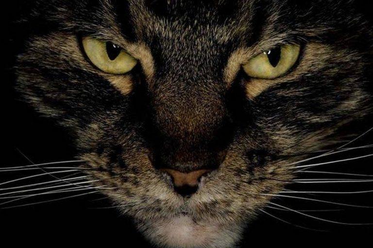 Gatos selvagens invadiram um necrotério e comeram cadáveres humanos?