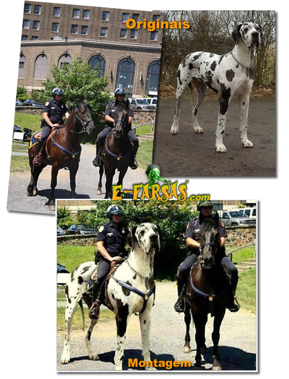Comparativo de imagens - cachorro gigante!