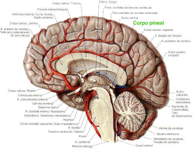 Será que usamos apenas 10% do nosso cérebro? (foto: reprodução)