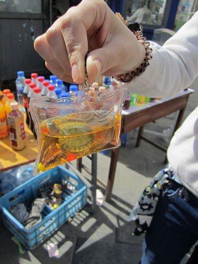 chaveiro_peixe_vivo_02 - chaveiros com tartaruga vivo na China