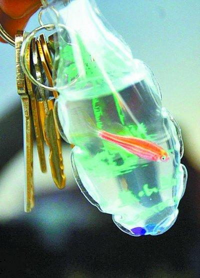 chaveiro_peixe_vivo_03 - chaveiros com peixes vivos na China