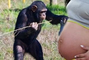 Garota teria engravidado de um chimpanzé e revoluciona a ciência! Será?