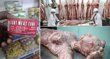 Please send this to all your contacts , it's very important .  Chinese people have started producing corned beef with their dead bodies and sending them to Africa . Please stay away from corned beef irrespective of brand , most especially in Africa and from Afro-Asian grocery shops . ??  Immi Calderwood