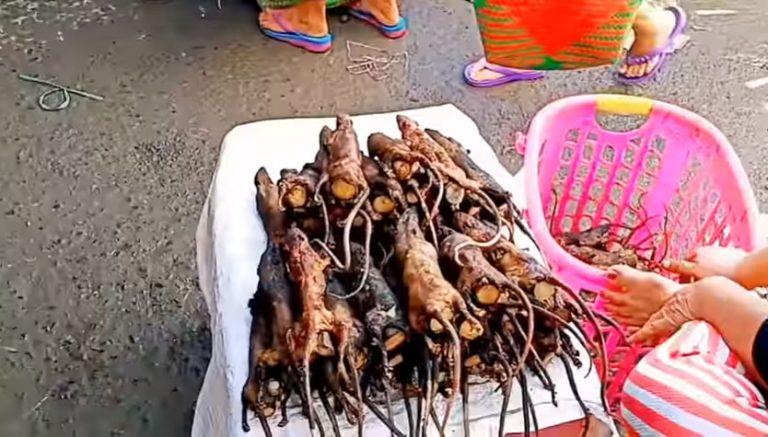 Feira chinesa vende ratos e morcegos e é a origem do coronavírus! Será verdade?