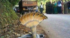 Cobra de 7 cabeças teria sido encontrada em Honduras! Fim do mundo?