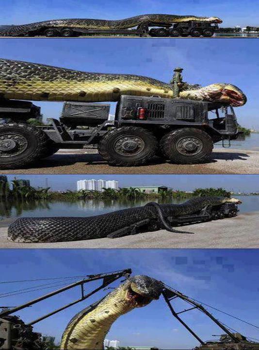 Cobra gigante teria sido capturada no Mar Vermelho! Verdade ou farsa?