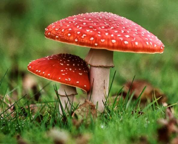 Cogumelo não curou o câncer do consumidor e, com certeza, não vai curar o de ninguém! (foto: Reprodução)
