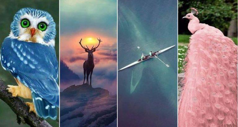 Incríveis fotos de animais são realmente verdadeiras ou falsas?