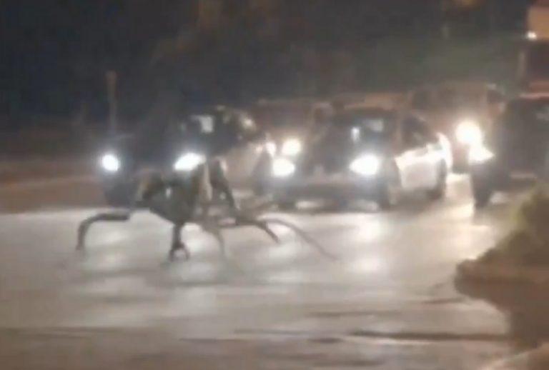 Uma estranha criatura espalhou o pânico na cidade de Ilhéus, na Bahia?