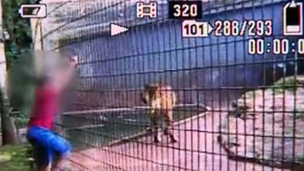Imagens mostram momentos antes do garoto ser atacado pelo tigre! (foto: Reprodução)