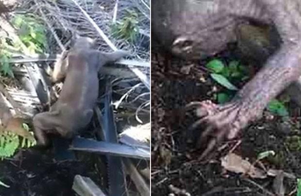 Estranho animal teria sido encontrado por trabalhadores na Ilha de Bornéu! O que será? (foto: reprodução/YouTube)