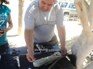Mais imagens do tubarão ciclope
