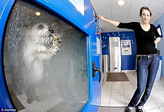Dog-o-Matic já teria matado vários cachorros por causa do estresse causado pela máquina de lavar cães! Será verdade? (foto: Reprodução/Facebook)