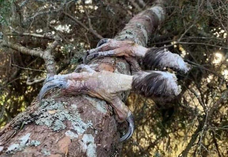 Uma águia congelou até a morte, derreteu, quebrou e sobraram apenas as patas?