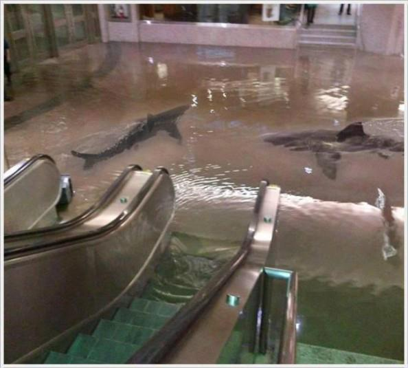 Enchente em Shopping! Será?