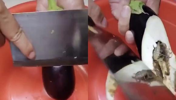 Vídeo mostra berinjela cheia de escorpiões! Verdadeiro ou falso?