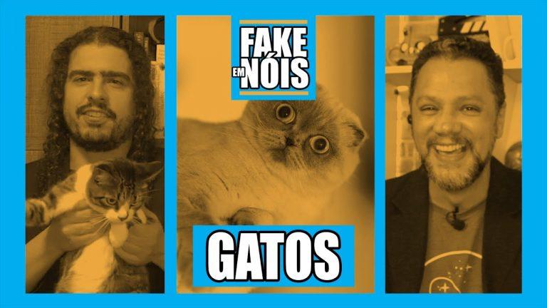 Fake em Nóis! Analisando 15 notícias sobre gatinhos!
