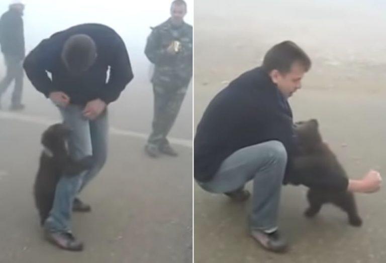 Vídeo mostra um filhote de urso abraçando um homem que o salvou de um incêndio?