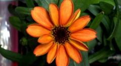 Essa seria a primeira flor a nascer no espaço! Será verdade? (foto: Reprodução/Twitter)